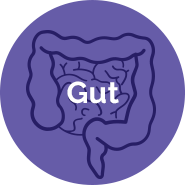 Quasi Vivo® Gut application
