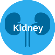 Quasi Vivo® Kidney application