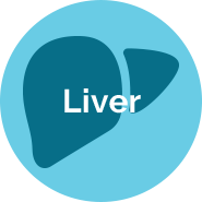 Liver Models Using Quasi Vivo