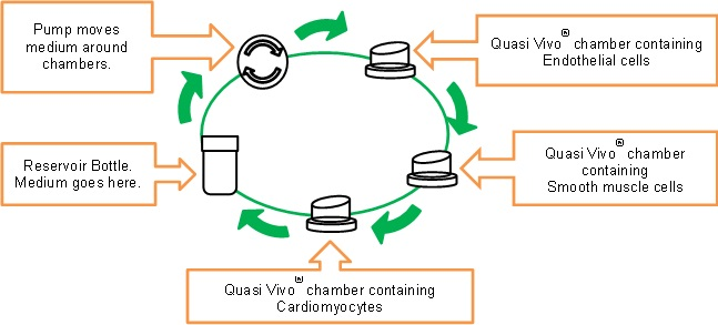 Quasi Vivo® example set up